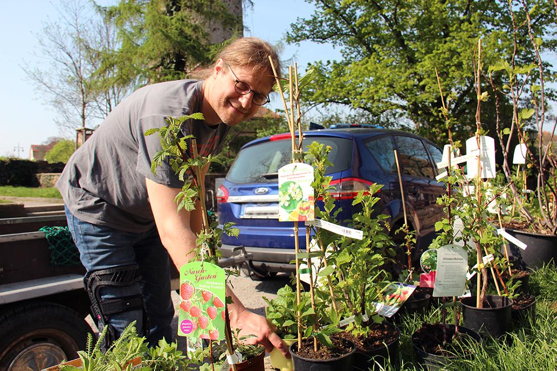 Mann sortiert Beerensträucher, heimische Kräuter und Gemüsepflanzen neben der Michaeliskirche